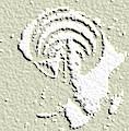logo FEVR